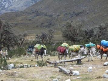 transport-v-bazni-tabor